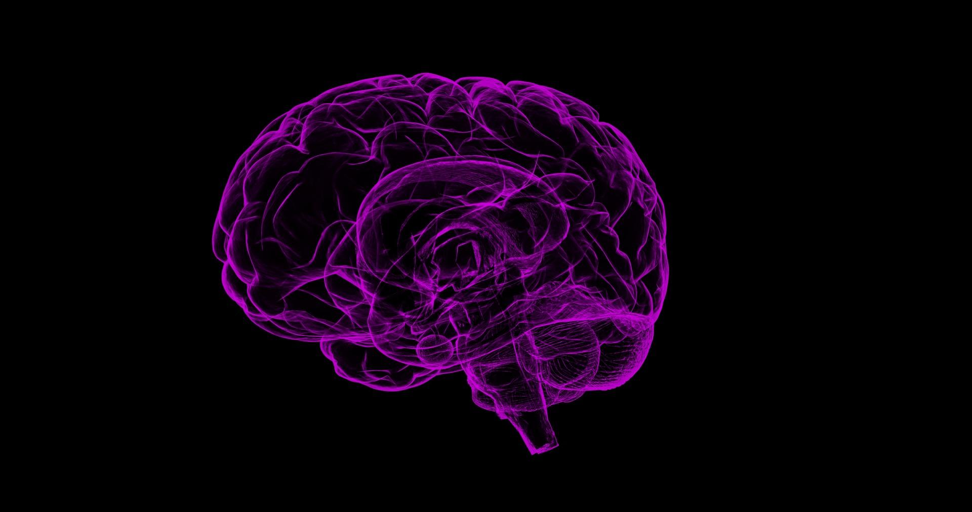 imagen sobre la cocaína y el cerebro